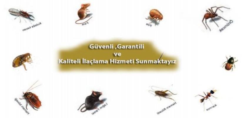 Her Böcek Türü için Farklı Uygulama Gerekir