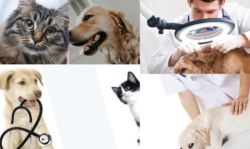 Veteriner Klinik Yazılımı