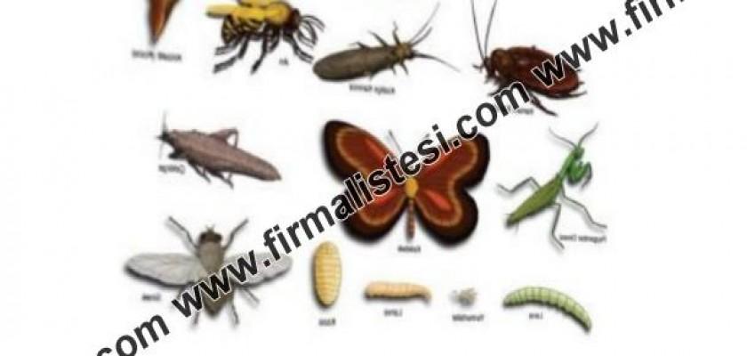 Böcekler ve Haserelerle Mücadele
