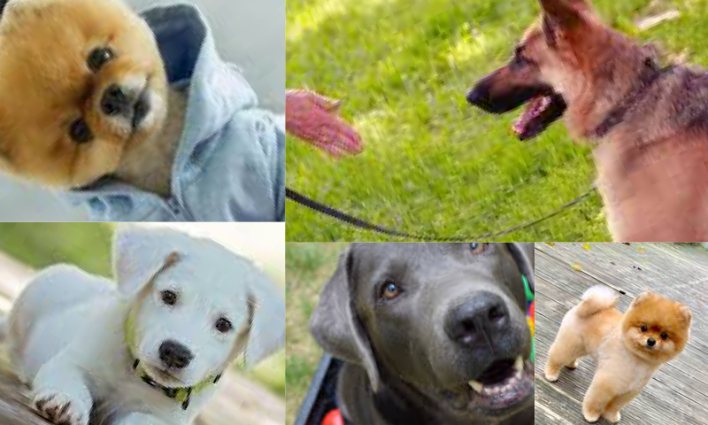 Köpek Sahiplenmek İçin Nasıl Bir Yol İzlenmelidir?