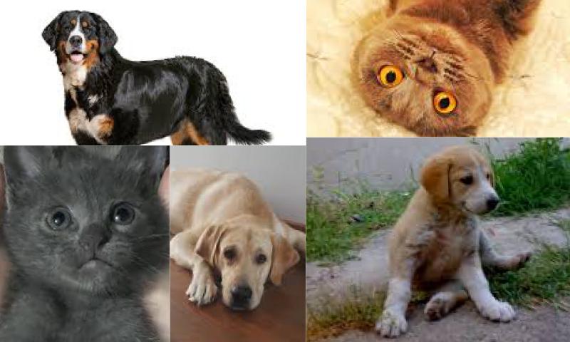 Kedi Maması Fiyatları Neye Göre Değişmektedir?