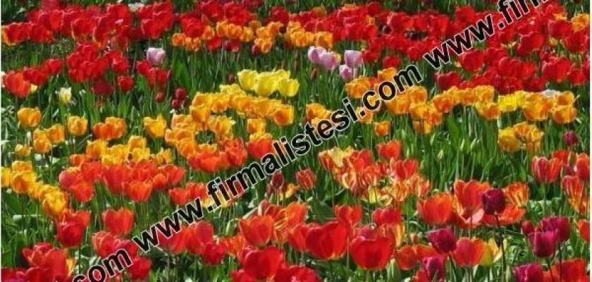 Çiçeklerin Hikayeleri